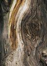 树纹0077, 树纹,纹饰雕塑,枯木 劈开 干涩