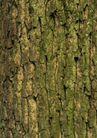树纹0078, 树纹,纹饰雕塑,黄绿 树苔 苔斑