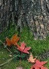 树纹0079, 树纹,纹饰雕塑,树底 落叶 红色