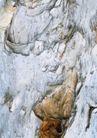 树纹0081, 树纹,纹饰雕塑,