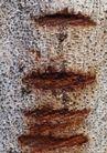 树纹0082, 树纹,纹饰雕塑,