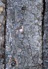 树纹0083, 树纹,纹饰雕塑,