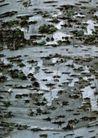 树纹0084, 树纹,纹饰雕塑,