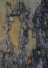 树纹0087, 树纹,纹饰雕塑,