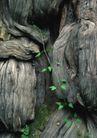 树纹0088, 树纹,纹饰雕塑,