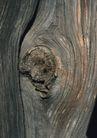 树纹0090, 树纹,纹饰雕塑,