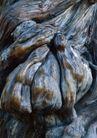 树纹0091, 树纹,纹饰雕塑,树根 形状 沧桑