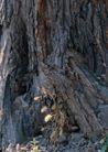 树纹0094, 树纹,纹饰雕塑,树干 树皮 粗糙