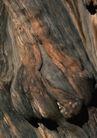 树纹0098, 树纹,纹饰雕塑,树雕 作品 木头