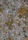 古今墙纹0095,古今墙纹,纹饰雕塑,墙面 绿苔 植物