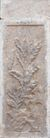 壁雕遗雕0068,壁雕遗雕,纹饰雕塑,石碑 叶子 图纹