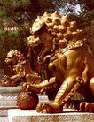 养性门前鎏金铜狮,雄伟紫禁城,首都风光,铜狮 威武 踩球