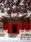 御花园雪后,雄伟紫禁城,首都风光,寒雪 冬景 庭院