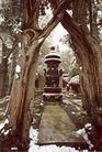 连理柏和铜鼎炉,雄伟紫禁城,首都风光,遗址 冬天 冬雪