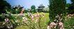 天坛春色,历史古迹,首都风光,公园 桃花 春天