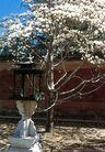 寝宫-02,历史古迹,首都风光,树木 木棉花 墙角