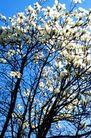 方胜亭春色,历史古迹,首都风光,花朵 植物 蓝天