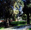 祭坛,历史古迹,首都风光,古树 树叶 小道