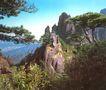 三清山,江西省,全国各省美景,山峰 松树 枝条