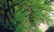 庐山,江西省,全国各省美景,壁崖 悬树 生长