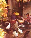 沂蒙山区农民生活,山东省,全国各省美景,玉米 母鸡 农妇