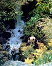熊猫,四川省,全国各省美景,大熊猫 竹叶 溪水