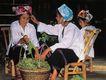 壮族女孩子的家务,广西壮族自治区,全国各省美景,家务 农家 掐菜