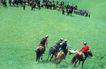 叼羊,新疆维吾尔自治区,全国各省美景,追逐 抢夺 猎物