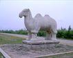 清东陵清西陵0063,清东陵清西陵,古代名胜,骆驼 石像 清东陵