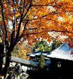 谐趣园秋景,颐和园美景,古代名胜,枫叶 漂亮 耀眼