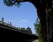 天坛礼堂长廊0067,天坛礼堂长廊,古代名胜,古树 屋顶 景色