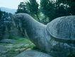 文物景点0067,文物景点,古代名胜,神龟 石像 龟壳