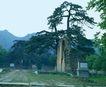 文物景点0070,文物景点,古代名胜,文物 单位 松树