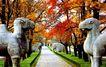 明孝陵,宝陵碑亭,古代名胜,动物 走道 红枫