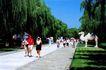 神路,宝陵碑亭,古代名胜,游客 柳树 石板路