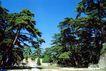 长陵凌恩殿遗址2,宝陵碑亭,古代名胜,树荫 丛林 地带