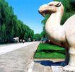 骆驼,明陵幽景,古代名胜,
