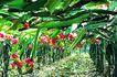 果园风光0149,果园风光,农业,