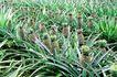 果园风光0155,果园风光,农业,