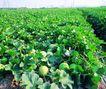 果园风光0158,果园风光,农业,