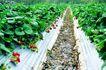果园风光0161,果园风光,农业,