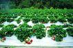 果园风光0162,果园风光,农业,