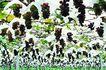 果园风光0164,果园风光,农业,