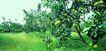 果园风光0170,果园风光,农业,果�@�L光
