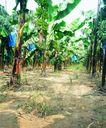 果园风光0176,果园风光,农业,田间风光 泥土地 果树