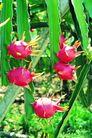 果园风光0182,果园风光,农业,水果 热带水果 果实