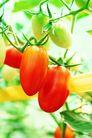 果园风光0183,果园风光,农业,丰收 田园