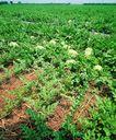 果园风光0185,果园风光,农业,菜地 青菜