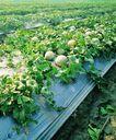 果园风光0186,果园风光,农业,瓜果 农业