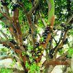 果园风光0199,果园风光,农业,果实繁茂